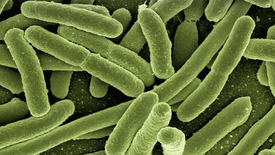 il batterio della legionella evolve ed è sempre più pericoloso